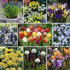 Spring Flowering Bulb Collections