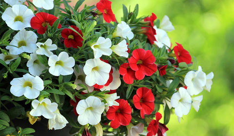Bedding Plant Size Guide